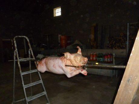 Le beau petit cochon